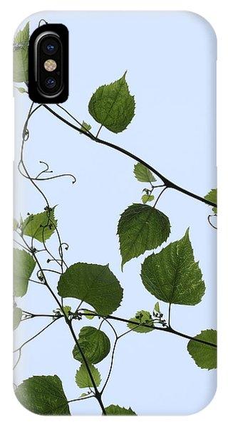 Grape Vine And Sky IPhone Case