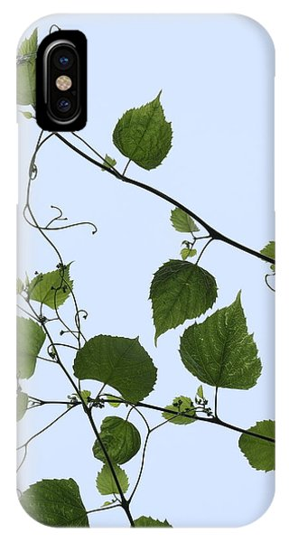 Grape Vine And Sky IPhone Case