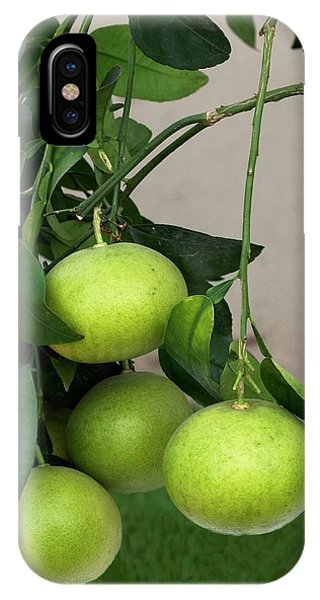 Grapefruit iPhone Case - Grapefruit (citrus Paradisi) by Brian Gadsby/science Photo Library