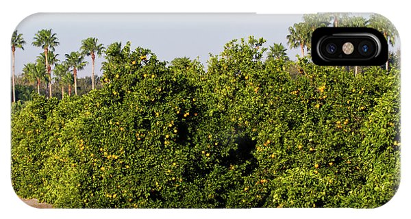 Grapefruit iPhone Case - Grapefruit Grove In Mission, Texas by Larry Ditto
