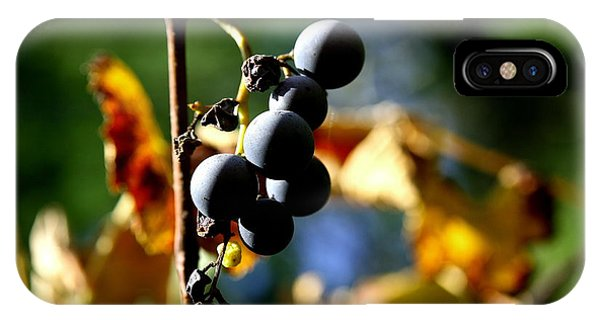 Grapes On The Vine No.2 IPhone Case