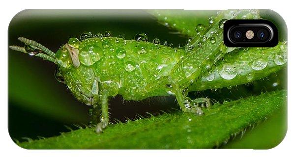 Grass Hopper In The Rain IPhone Case