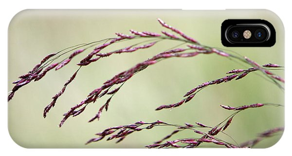 Grass Seed IPhone Case