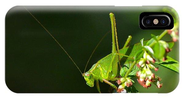 Grasshopper #1 IPhone Case