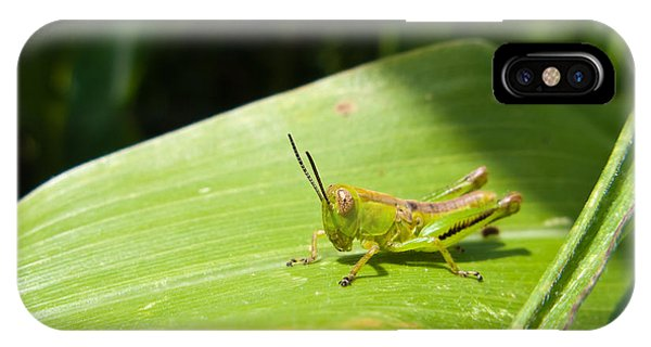 Grasshopper On Corn Leaf   IPhone Case