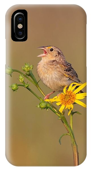 Grasshopper Sparrow Singing IPhone Case