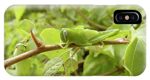 Grasshopper Phone Case by Steve Allen/science Photo Library