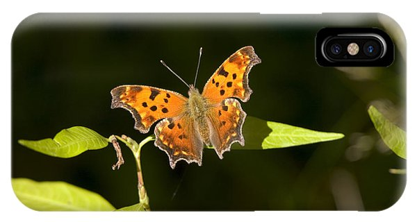 Pterygota iPhone Case - Gray Comma Butterfly by Gregory K Scott