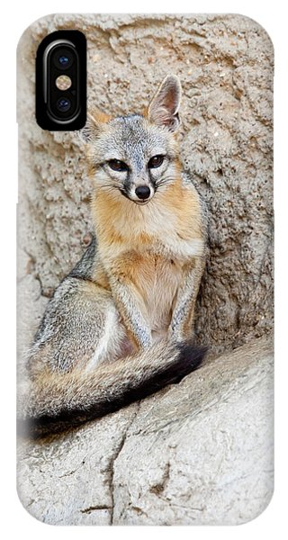 Gray Fox (urocyon Cinereoargenteus Phone Case by Larry Ditto