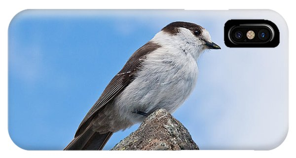 Gray Jay With Blue Sky Background IPhone Case