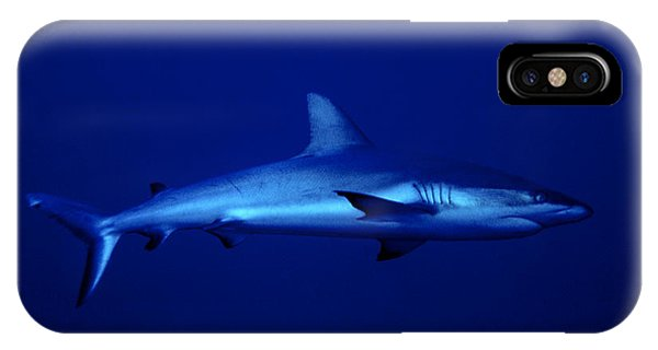 Gray Reef Shark IPhone Case