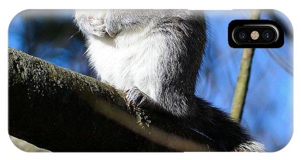 Gray Squirrel IPhone Case