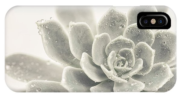 Succulent iPhone Case - Gray Succulent 2 by Lucid Mood