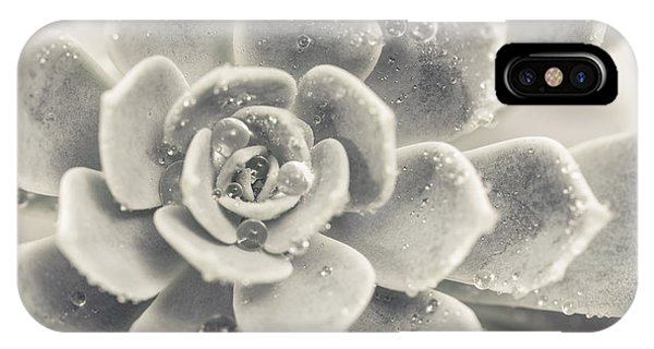 Succulent iPhone Case - Gray Succulent by Lucid Mood