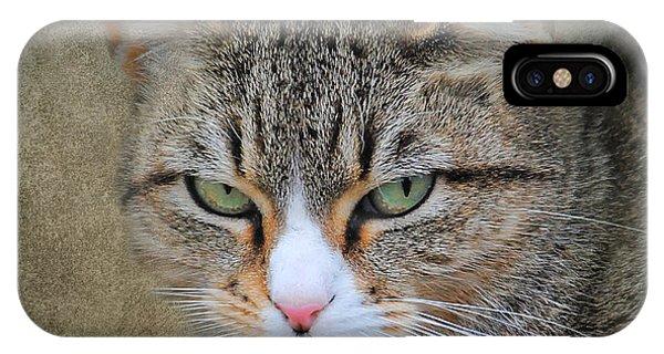Gray Tabby Cat IPhone Case