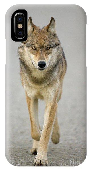 Mp iPhone Case - Gray Wolf Denali National Park Alaska by Yva Momatiuk John Eastcott