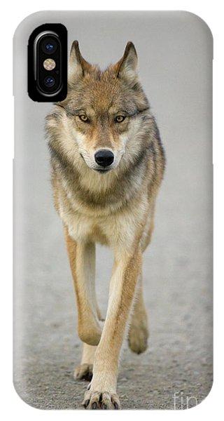 Gray Wolf Denali National Park Alaska IPhone Case