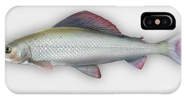 Grayling - Thymallus Thymallus - Ombre Commun - Harjus - Flyfishing - Trout Waters - Trout Creek IPhone Case