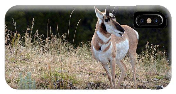 Grazing Antelope IPhone Case