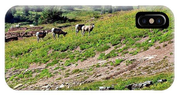 Rocky Mountain Bighorn Sheep iPhone Case - Grazing Big Horn Sheep by Robert Bales