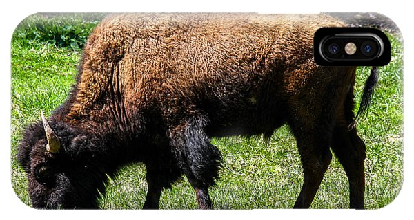 IPhone Case featuring the photograph Grazing In The Grass by Robert L Jackson