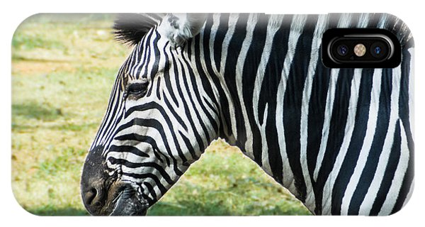 Grazing Zebra IPhone Case