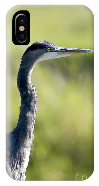 Great Blue Heron Backlit IPhone Case