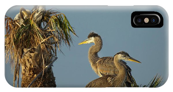 Anhinga iPhone Case - Great Blue Heron Chick In Nest, Ardea by Maresa Pryor