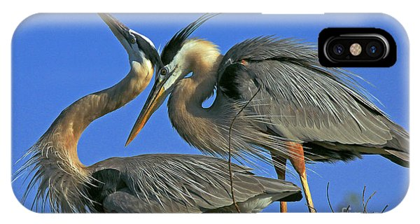 Great Blue Heron Courting Pair IPhone Case