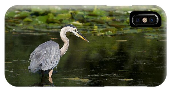 Great Blue Heron Hunting IPhone Case