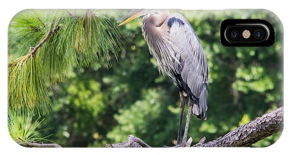Great Blue Heron I IPhone Case