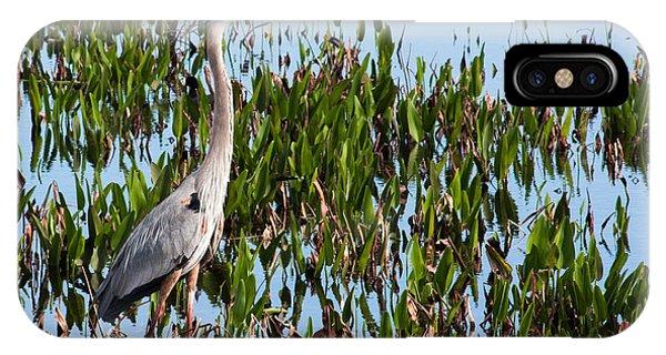 Great Blue Heron In Pickerelweed IPhone Case