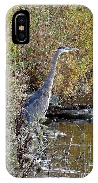 Great Blue Heron - Juvenile IPhone Case