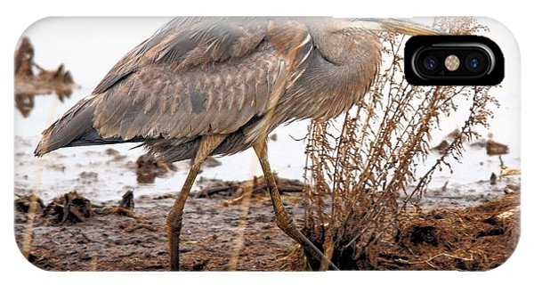 Great Blue Heron Phone Case by Linda  Barone