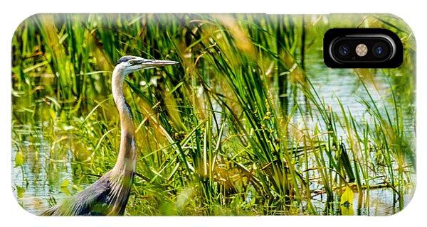 Horicon Marsh iPhone Case - Great Blue Heron by Randy Scherkenbach