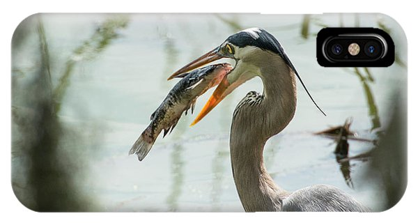 Catfish iPhone Case - Great Blue Heron With Fish In Mouth by Sheila Haddad