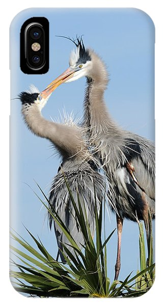 Great Blue Herons At Nest Kissing IPhone Case
