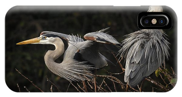 Great Blue Herons  IPhone Case