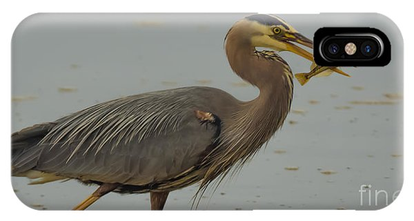 Great Blue Herron Eating Fish IPhone Case