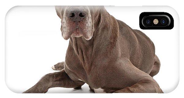 Great Dane Dog Isolated On White IPhone Case