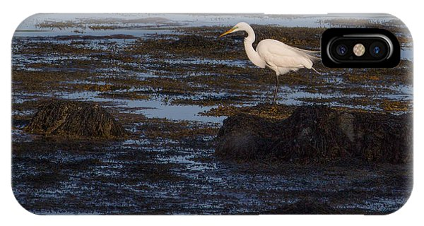 Great Egret At Avery Point IPhone Case