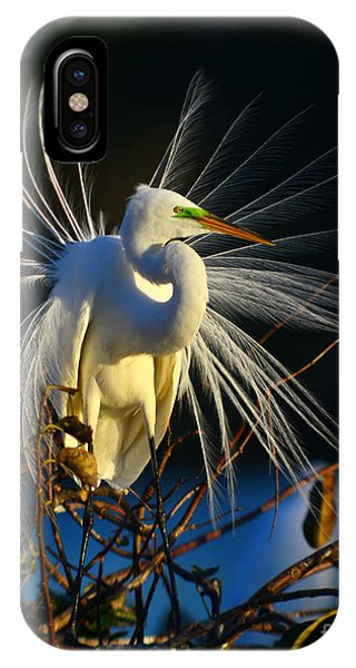 Great Egret With Breeding Plumage 1 IPhone Case