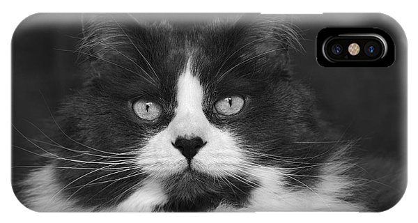 Great Gray Cat IPhone Case