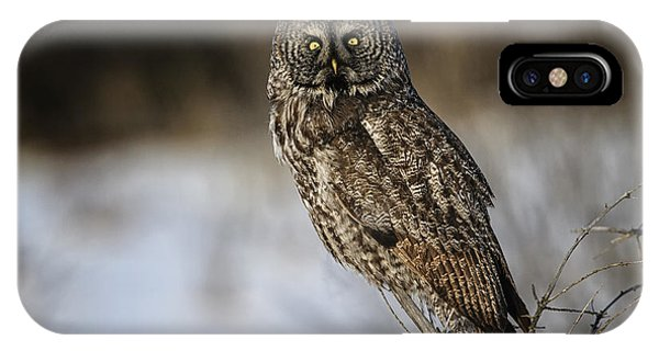 Great Gray Owl 2 IPhone Case