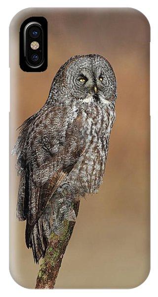 Kingsville iPhone Case - Great Gray Owl by Daniel Behm