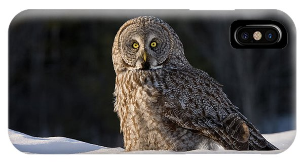 Great Gray Owl In Snow IPhone Case