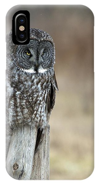 Kingsville iPhone Case - Great Grey Owl On Stump by JLambe Photography