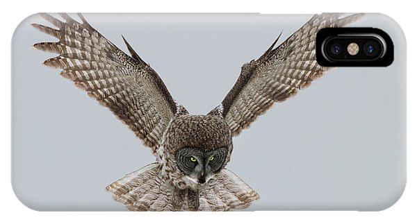 Dive iPhone Case - Great Grey Owl by Sufang Wang