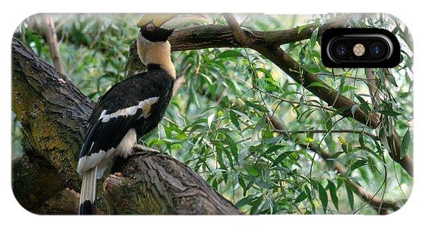 Great Indian Hornbill IPhone Case