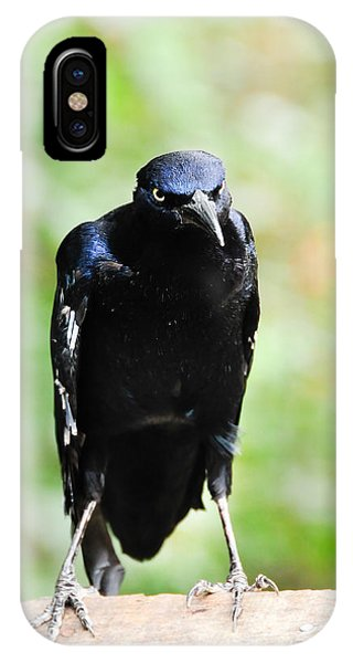 Great Tailed Grackle IPhone Case